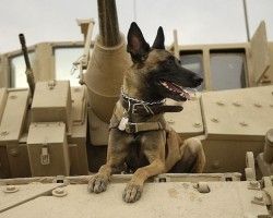How To Send Care Packages To US Military Working Dogs Deployed Overseas