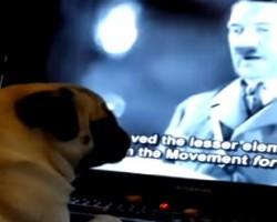 Man Teaches Pug To Do Nazi Salute When He Says, 'Sieg Heil'