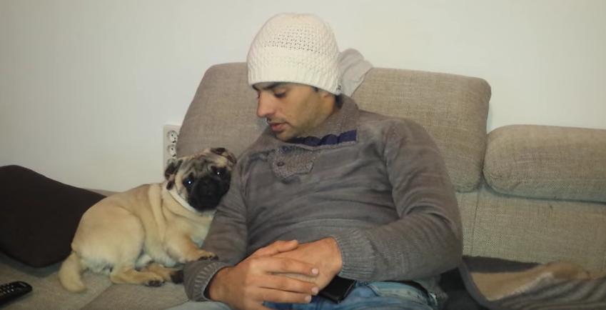 Resultado de imagen para pug cuddle owner