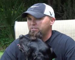 War Veteran Has A Panic Attack During An Interview. Watch The Service Dog…