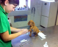 22 Dogs Who HATE the Vet and Can't Believe Their Owners Betrayed Them