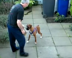 [Video] Boxers May Appear Gentle and Loving, But Beware.. He Can Do THIS To Defend Himself.
