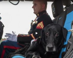 Veteran Bomb-Sniffing Dog Is Laid To Rest With A Beautiful Parade And Emotional Goodbye
