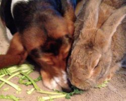 Sneaky Dog Has Some Serious Sharing Issues When It Comes To Kale