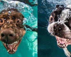 Ever Wonder What It Looks Like When Your Dog Fetches A Ball Underwater?