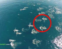 A Drone Captured This Rare And Unusual Event Happening In The Ocean. Can You Spot It?