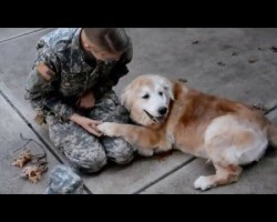 Elderly Dog Reunites with Soldier. The Dog's Reaction is PRICELESS!