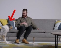 They Had Them Sit On The Couch. But When They See Their Dogs? OMG!