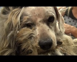 Dog Was Homeless His Whole Life. Watch His AMAZING Transformation!