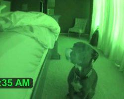 Dad Sets Up Night Vision Camera, Captures Pit Bull Acting Strange At 5 A.M.
