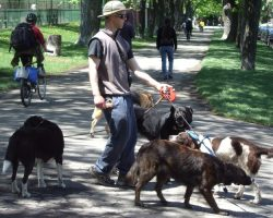 Dogwalker's Craigslist Ad Takes The Internet By Storm, And The Reason Is Hilarious