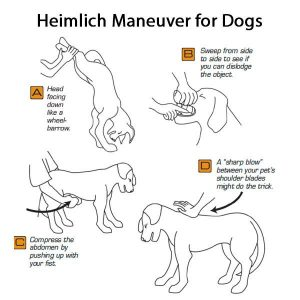 dog-heimlich-maneuver-steps