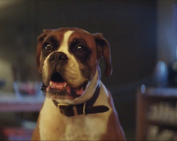 Dog Lovers, Get Ready for the Cutest Christmas Ad of All Time