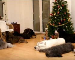 He tells his dogs to be good while he's gone, but they have a Christmas surprise for his return