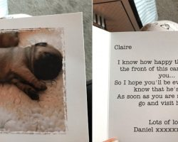 This Guy Just Set The Bar For Relationship Goals By Surprising His Girlfriend With A Baby Pug
