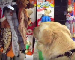 Dog Who Never Knew Love Gets To Pick Out Her Very First Toy