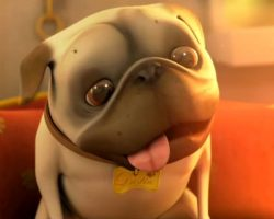 See Why This Short Film About a Pug and a Cleaning Robot Has People Smiling From Ear to Ear