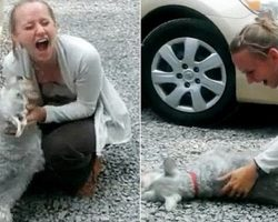 Dog Passes Out from Overwhelming Joy as She Reunites with Owner After 2 Years