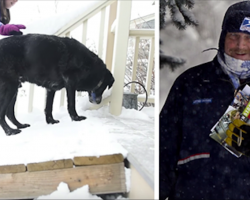 Mailman Does the Sweetest Thing for a Senior Dog on his Route
