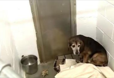 Dog's been missing for 2 years, but watch when he finally hears his owner's voice again