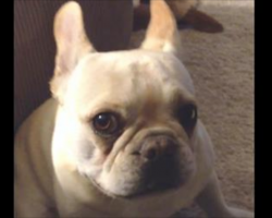 Mom asks bulldog about his day. Bulldog responds in hilarious fashion