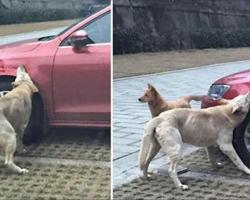 Man Kicks A Stray Dog, So The Dog Exacts Instant Revenge