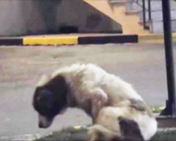 [Video] Abandoned Dog Is Too Scared To Be Rescued, But Woman Makes It Her Mission To Save Him