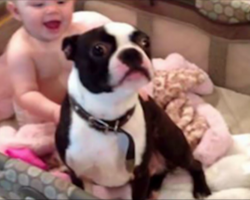Dog Jumps Into The Baby's Crib – Then Mom Realizes What's Really Happening