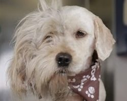 Charlie The Homeless Dog Got A Second Chance At Life After An Incredible Makeover