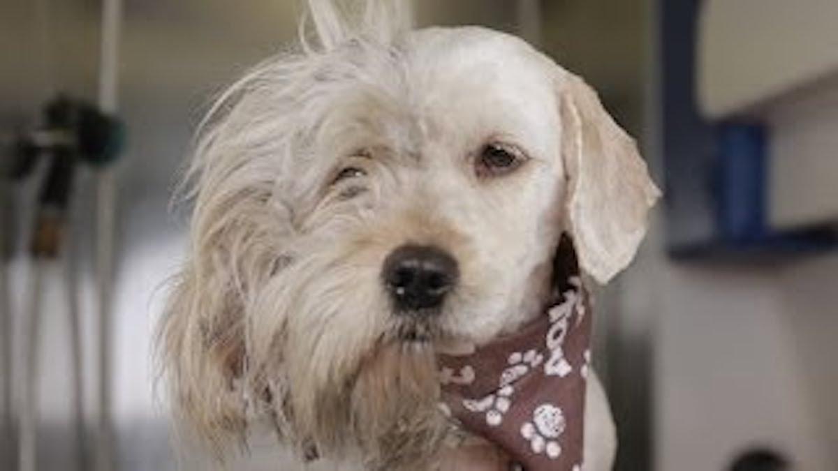 Los Angeles Dog Shelter Adoption