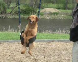 Dad places family dog in the swing. Dog proceeds to have the time of her life