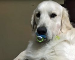 He Popped a Pacifier Into His Mouth. Now Watch What Happens When Mom Tries to Take It From Him.