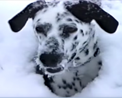 [Video] Man let his dog outside after a massive snowstorm. What he caught on camera is priceless