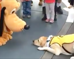 [Video] This guide dog's reaction to meeting Pluto is the best thing you'll see all week