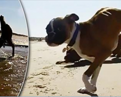 [Video] Dog has hind legs removed after birth, doesn't let that stop him from living life to the fullest