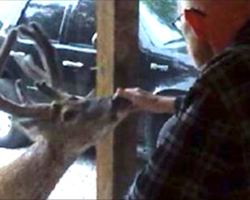 Her sick father was about to die, but that's when a deer showed up