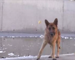 [Video] Man tries to help this disturbed German Shepherd – and gets this response in return
