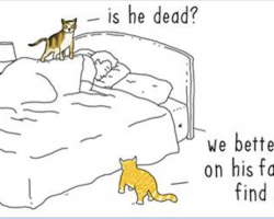 Artist imagines 'if animals could talk,' creates hilarious comics showing what it might be like