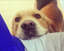 6 Problems Only Golden Retriever Owners Will Understand
