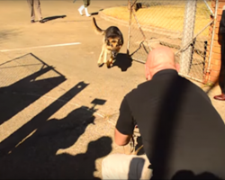 [Video] Military Dog Reunites With Soldier After Years Apart. When They Open The Gate, He Runs Full Speed