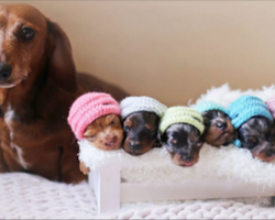 This Sausage Dog's Maternity Shoot With Her Tiny Puppies Is So Adorable