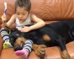 [Video] Girl Shares A Sweet Moment With Her Doberman Pinscher While Brushing His Teeth