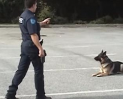 [Video] K9 Shows Off His Smarts And Makes Everyone Laugh