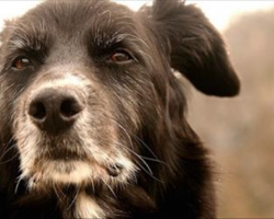 7 Reasons To Consider Adopting A Senior Dog