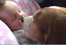 Baby Suffers Fatal Stroke. Family Dogs Refuse To Leave Baby's Side