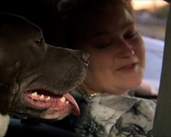 [Video] Uber Driver Adopts Pit Bull After Passenger Left Her Behind In Car