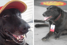 Dog Abandoned At Gas Station Is Now Its Cutest Employee
