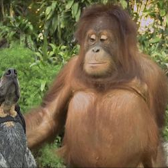 Everyone on the planet should see this 1 minute animal video