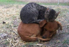 25 hilarious photos of cats sleeping on dogs