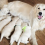 Family Dog Give Birth to Litter of Puppies. When Owner Looked Closer at One Puppy, She FROZE